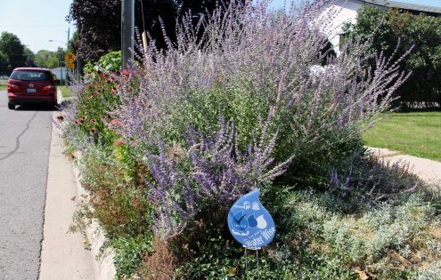 """Blue"" gardens are designed with water in mind"