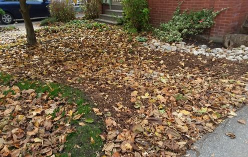 Save your leaves!