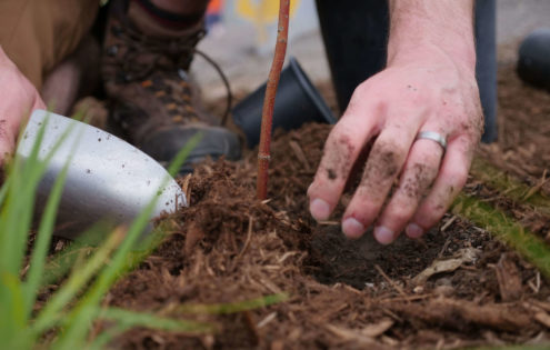 Planning for Planting: Discover Trees for your Yard